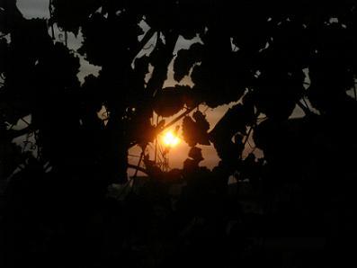 بزوغ للشمس من شرفة منزلي