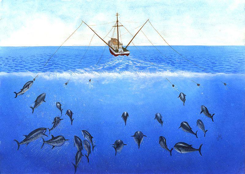عملية صيد الأسماك بالتشخيط